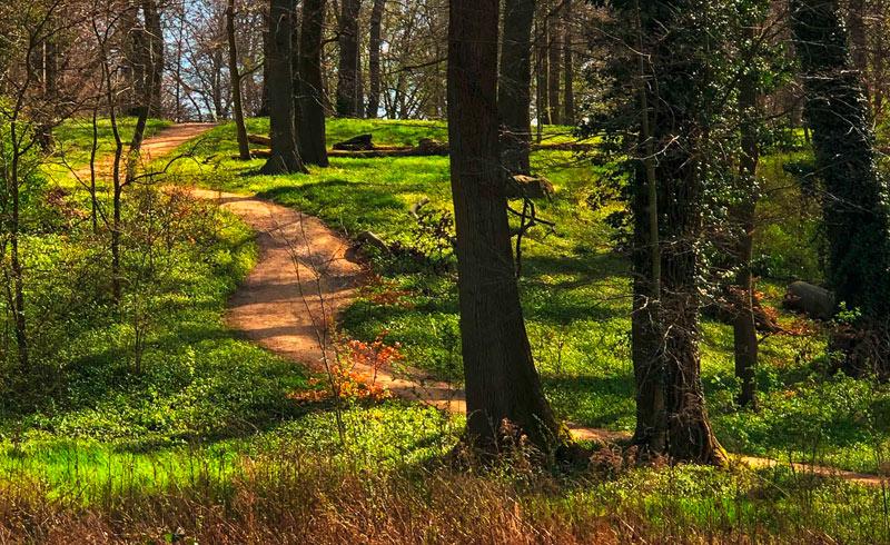 Wald am Wannsee, Bärlauch, Frühling