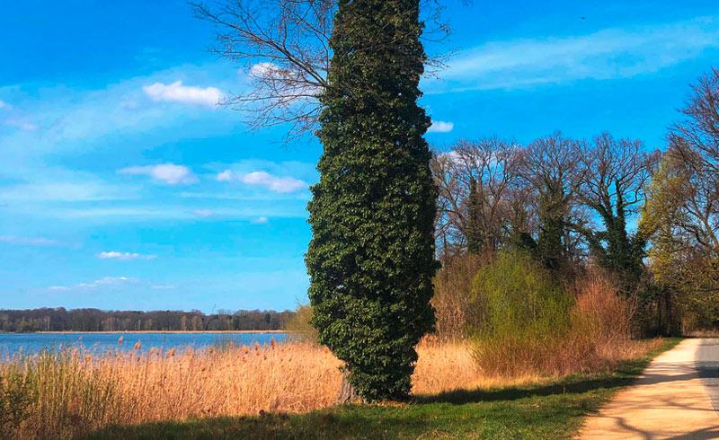 Weg zum Schloss Glienicke, Wannsee, Frühling